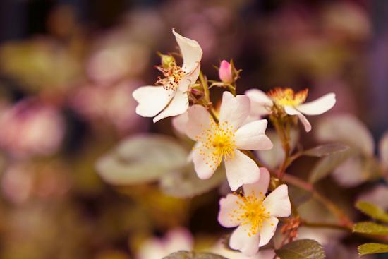 Flowers near Padstow